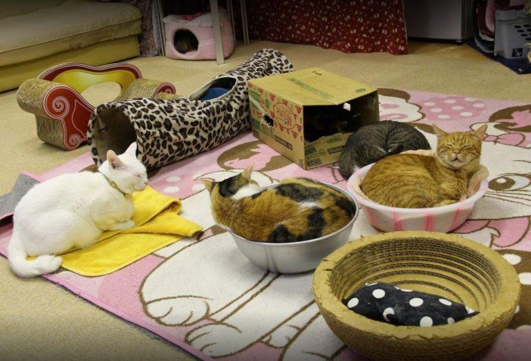 La imagen tiene un atributo ALT vacío; su nombre de archivo es Cats-Cafe-Asakusa-Neko-camaleonicasblog.jpg